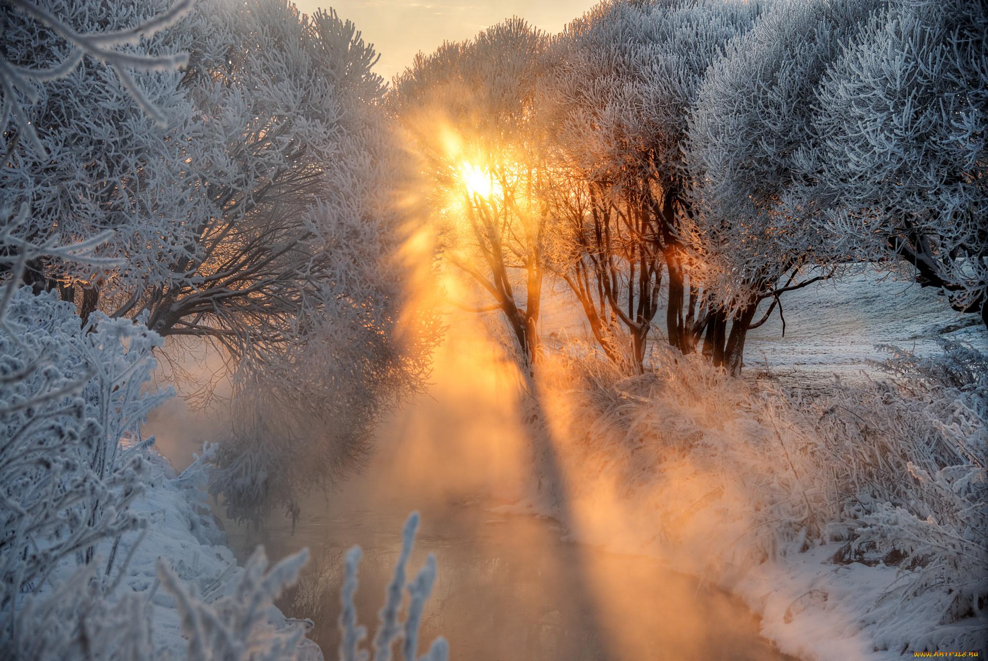 животные были фото зимнего рассвета сегодня